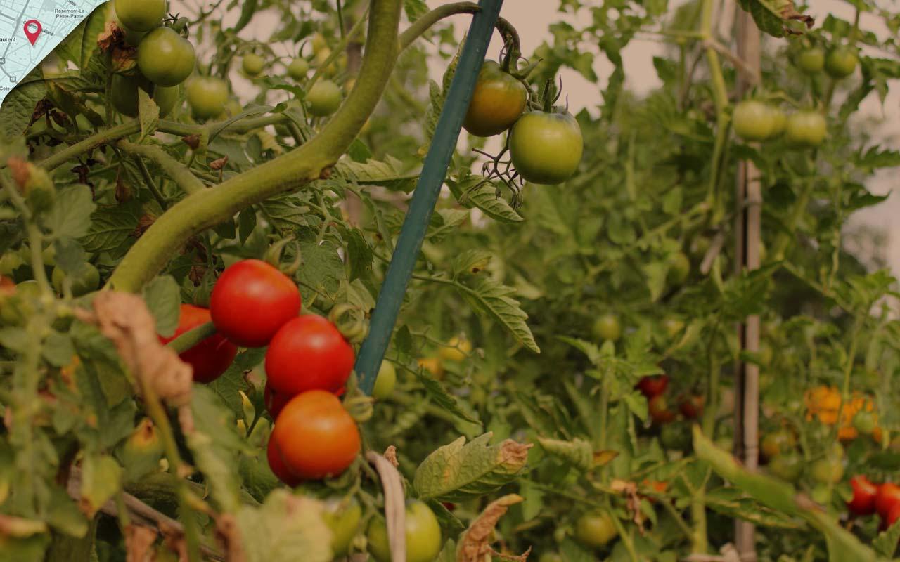 Image de fond du thème Au jardin