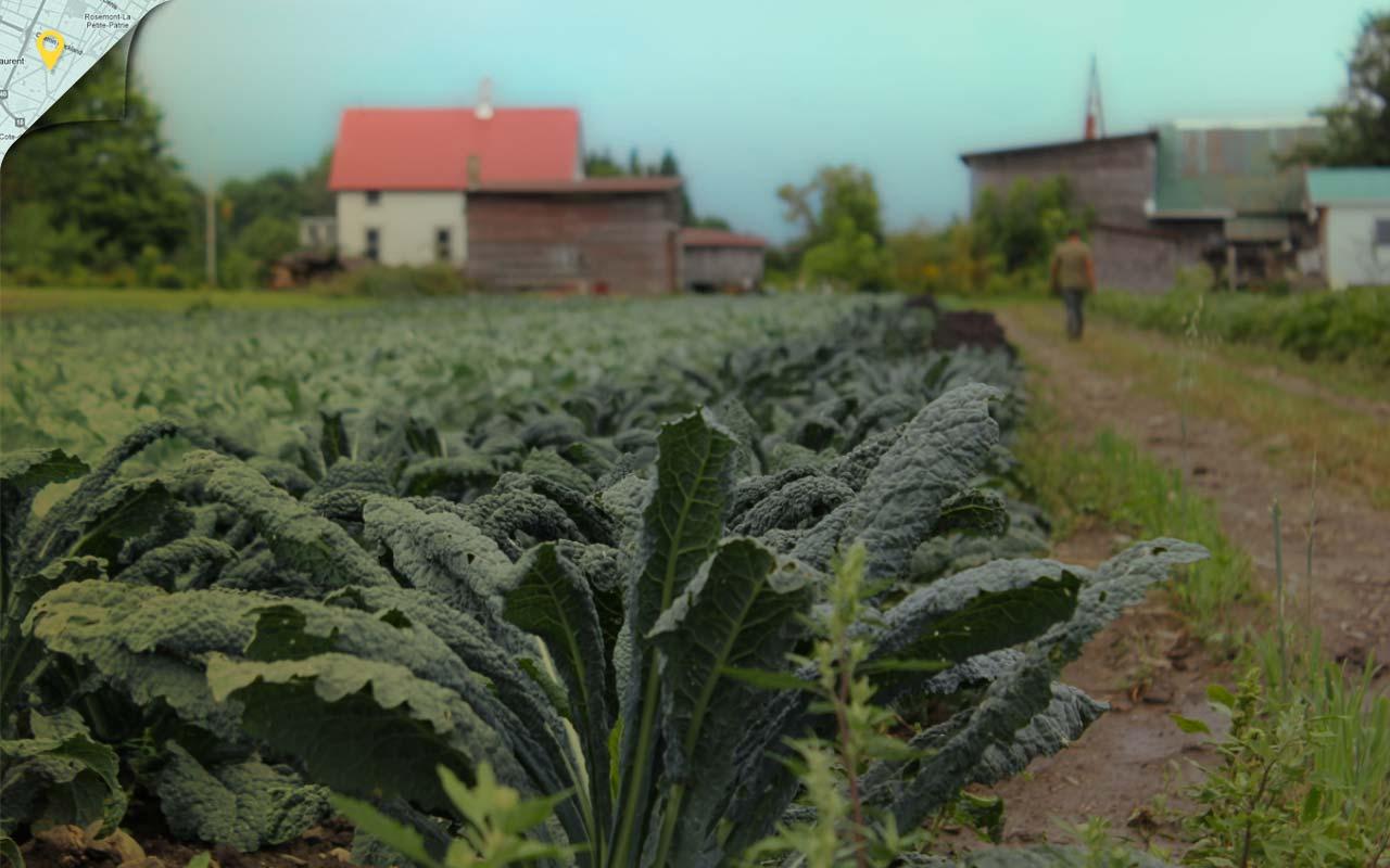 Image de fond du thème À la ferme